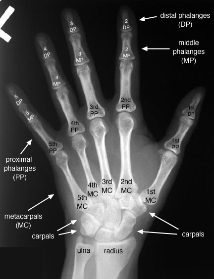 HandPALabelled