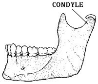 LatMandible: